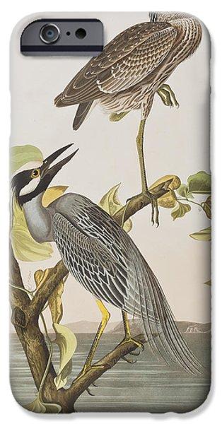 Animal Drawings iPhone Cases - Yellow Crowned Heron iPhone Case by John James Audubon