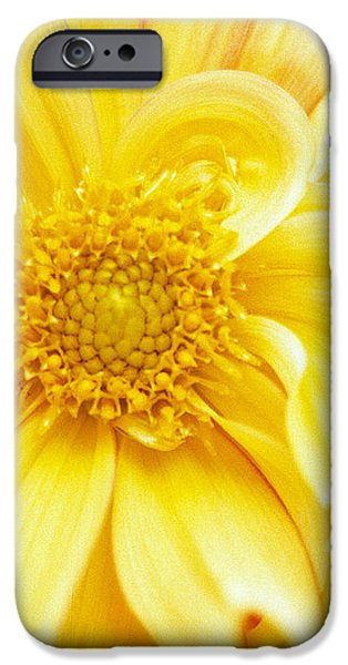Yellow Dahlia iPhone Case by Kathy Yates
