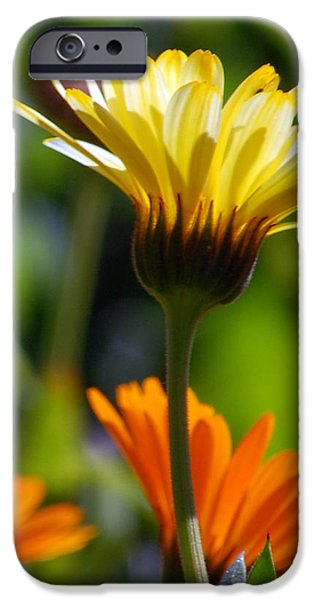 Floral Photographs iPhone Cases - Yellow Daisy iPhone Case by Amy Fose