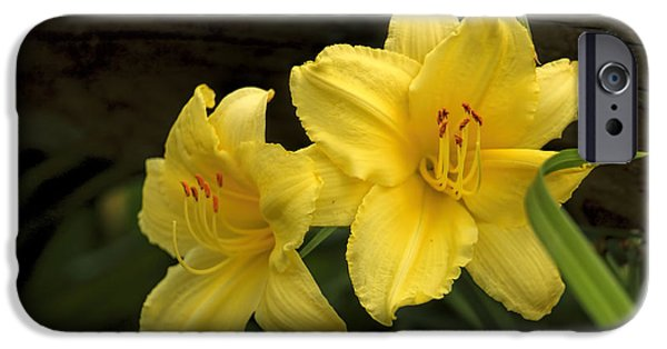 Botanical iPhone Cases - Yellow Day Lilies iPhone Case by Geraldine Scull