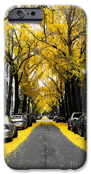 Fall iPhone Cases - Yellow Gingko Trees in Washington DC iPhone Case by Paul Frederiksen