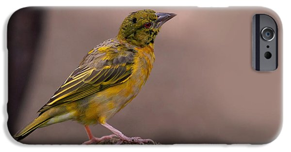 Wildlife iPhone Cases - Yellow-green Vireo iPhone Case by Rona Black