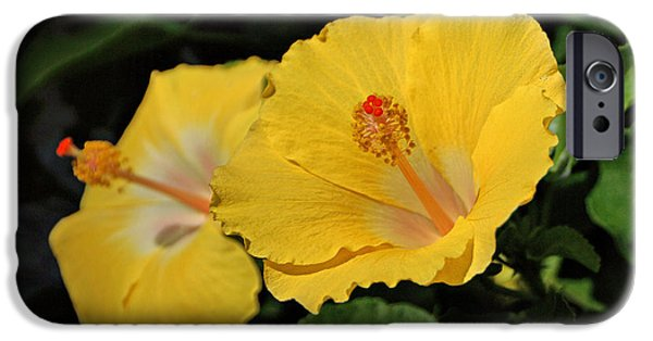 Indiana Photography iPhone Cases - Yellow Hibiscus iPhone Case by Sandy Keeton