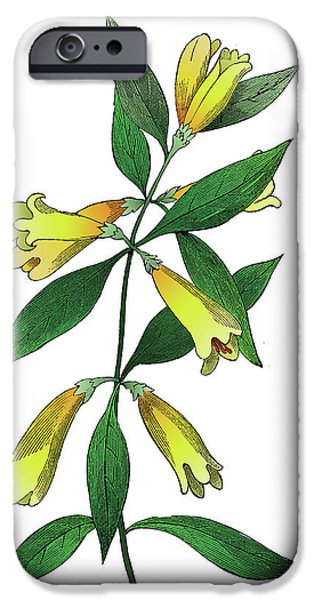 Outmoded iPhone Cases - Yellow Jessamine iPhone Case by Ziva