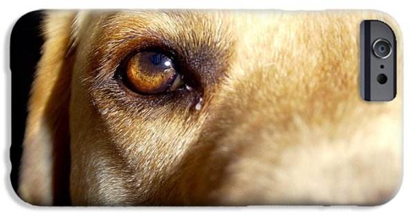 Dog Close-up iPhone Cases - Yellow Lab Eye iPhone Case by Jason Freedman