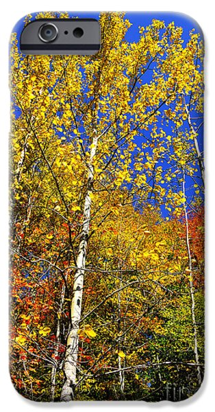 Summit iPhone Cases - Yellow Leaves Blue Sky iPhone Case by Thomas R Fletcher