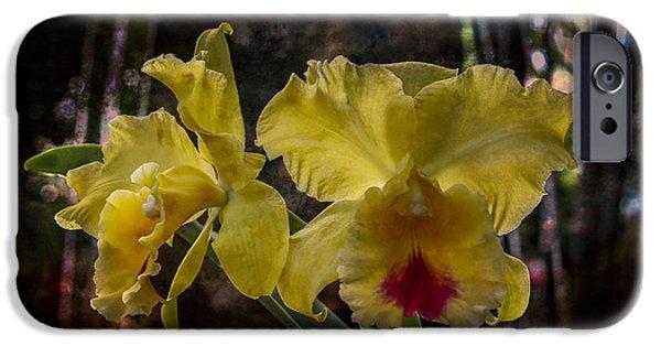 Cattleya iPhone Cases - Yellow Orchids iPhone Case by Debra and Dave Vanderlaan