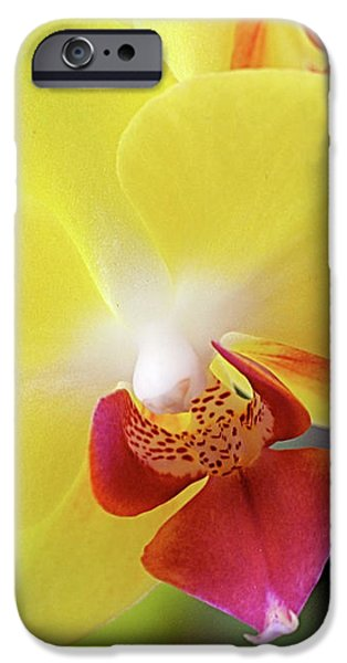 Yellow Phalaenopsis Orchids iPhone Case by Rona Black