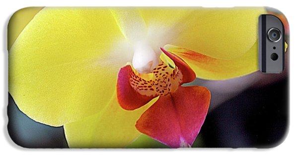 Phalaenopsis iPhone Cases - Yellow Phalaenopsis Orchids iPhone Case by Rona Black