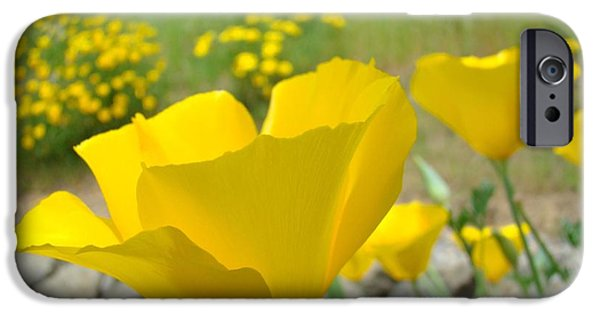 Recently Sold -  - Floral Photographs iPhone Cases - Yellow Poppy Flower Meadow Landscape art prints Baslee Troutman iPhone Case by Baslee Troutman
