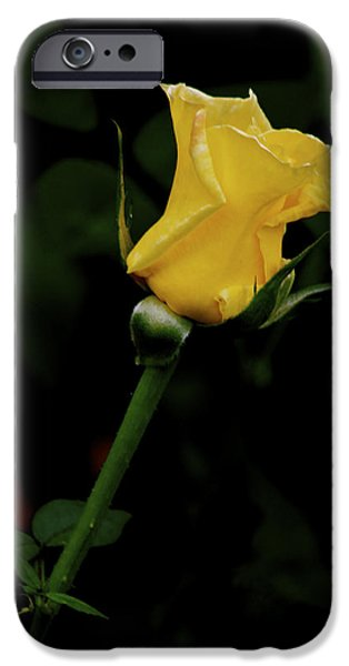 Flower Of Life iPhone Cases - Yellow Rose iPhone Case by Carol Mallillin-Tsiatsios