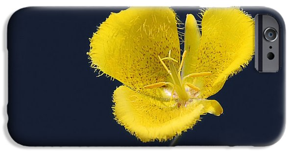 Decor iPhone Cases - Yellow Star Tulip - Calochortus monophyllus iPhone Case by Christine Till
