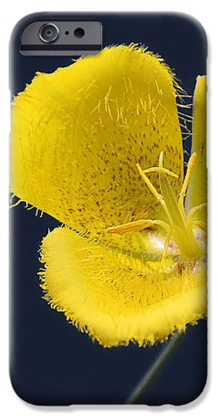 Yellow Star Tulip - Calochortus monophyllus iPhone Case by Christine Till
