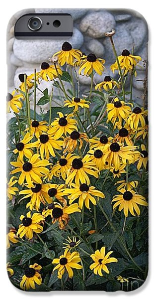 Music Pyrography iPhone Cases - Yellow Sun flowers iPhone Case by Joanna Thompson