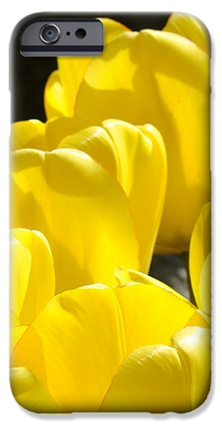Yellow Tulips Floral art prints Nature Garden iPhone Case by Baslee Troutman