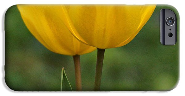Indiana Springs iPhone Cases - Yellow Tulips iPhone Case by Sandy Keeton