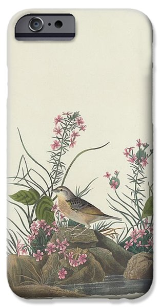 Sparrow iPhone Cases - Yellow-Winged Sparrow iPhone Case by John James Audubon