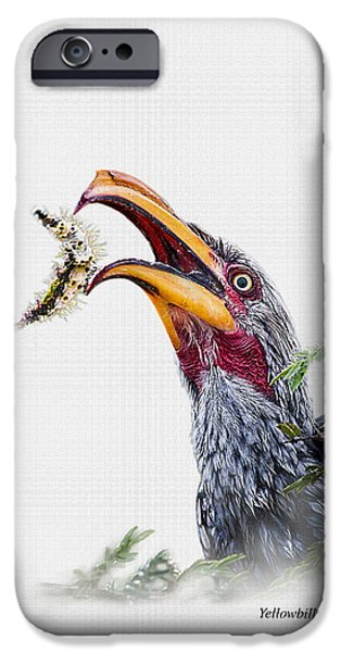 Business iPhone Cases - Yellowbilled Hornbill on white background iPhone Case by Ronel Broderick