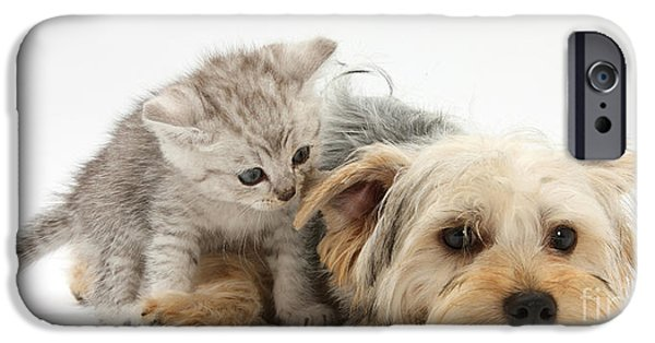 Domesticated Animals iPhone Cases - Yorkshire Terrier And Tabby Kitten iPhone Case by Mark Taylor