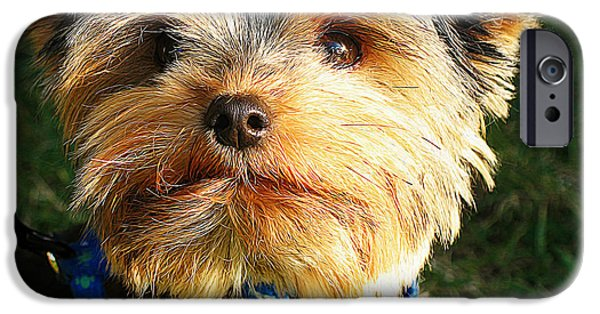 Cute Puppy iPhone Cases - Yorkshire terrier iPhone Case by Queso Espinosa