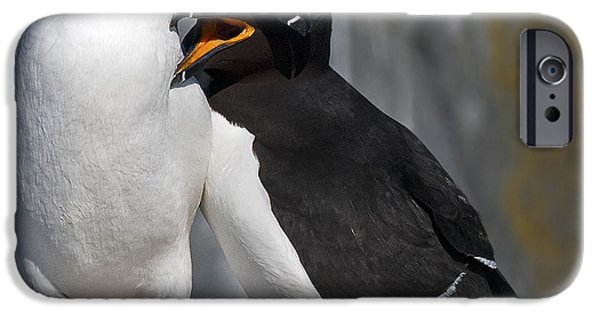 Razorbill iPhone Cases - You make me happy.. iPhone Case by Nina Stavlund