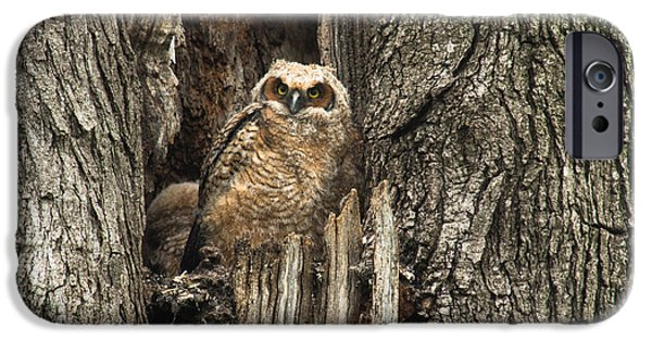 Baby Bird iPhone Cases - Young Baby Great Horned Owl In An Old Tree iPhone Case by Carol Mellema