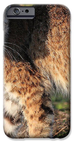 Young Bobcat 01 iPhone Case by Wingsdomain Art and Photography