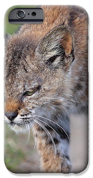 Young Bobcat 03 iPhone Case by Wingsdomain Art and Photography