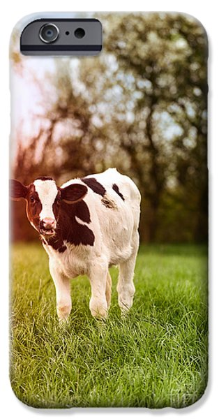 Farming Photographs iPhone Cases - Young Calf iPhone Case by Amanda And Christopher Elwell