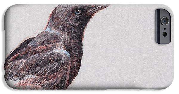Crows iPhone Cases - Young Crow 1 iPhone Case by Tracie Thompson