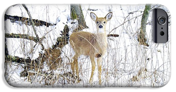 Business Photographs iPhone Cases - Young Doe And Spring Snow iPhone Case by Robyn King