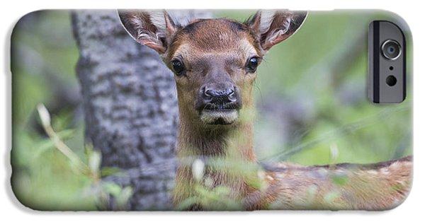 World No. 1 iPhone Cases - Young Elk  Cervus Canadensis , Jasper iPhone Case by Robert Postma