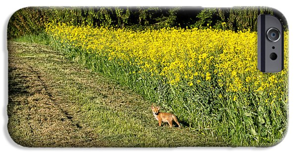 Dog In Landscape iPhone Cases - Young Fox In A Rapeseed Field iPhone Case by Panoramic Images