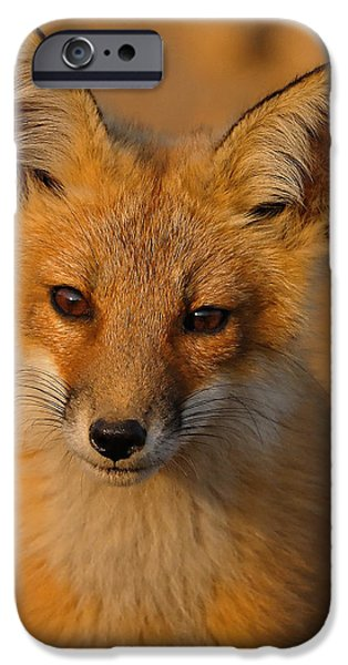 Young Fox iPhone Case by William Jobes