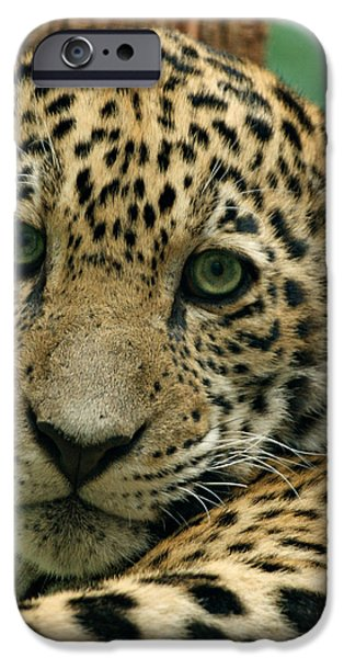 Young Jaguar iPhone Case by Sandy Keeton