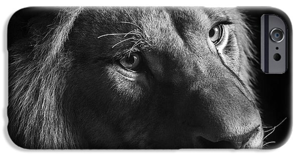 Lions Photographs iPhone Cases - Young Lion in black and white iPhone Case by Lukas Holas