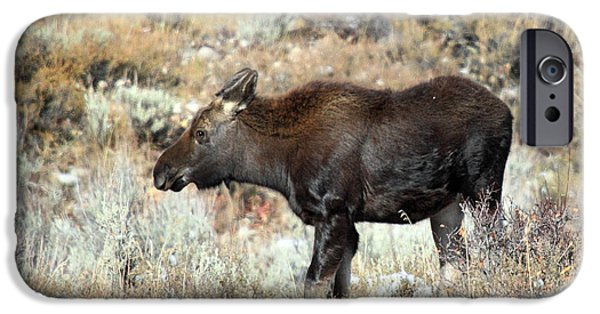 Fury iPhone Cases - Young moose in the wilderness of Grand Teton National Park iPhone Case by Pierre Leclerc Photography