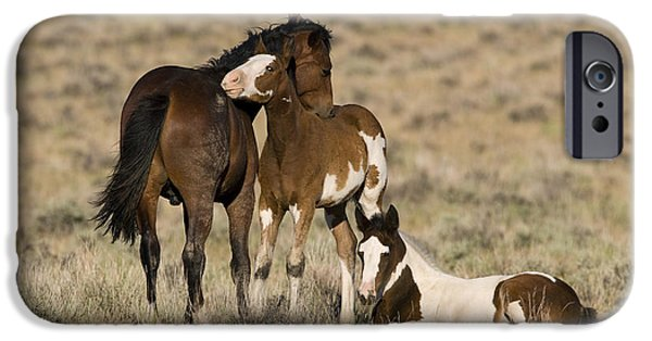 Bonding iPhone Cases - Young Mustangs Grooming iPhone Case by Jean-Louis Klein & Marie-Luce Hubert
