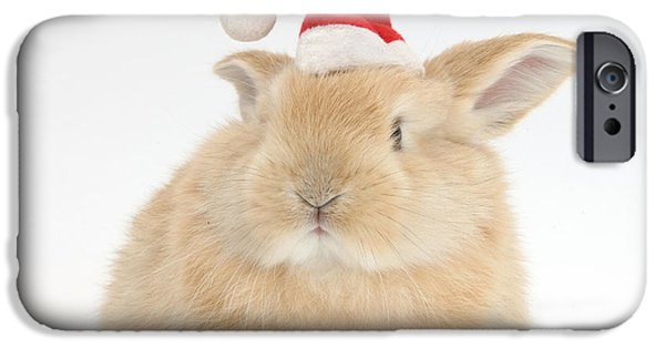 House Pet iPhone Cases - Young Sandy Rabbit Wearing A Christmas iPhone Case by Mark Taylor