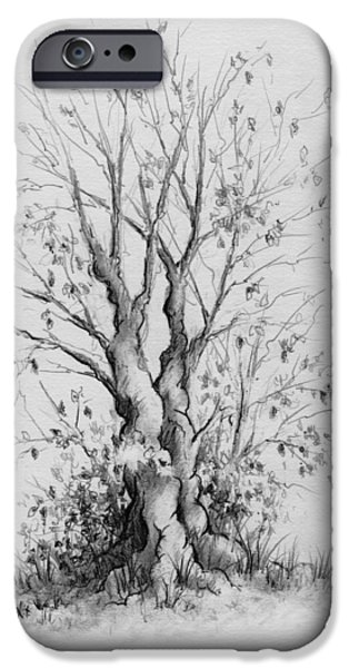 Tree Roots Drawings iPhone Cases - Young Tree iPhone Case by Rachel Christine Nowicki