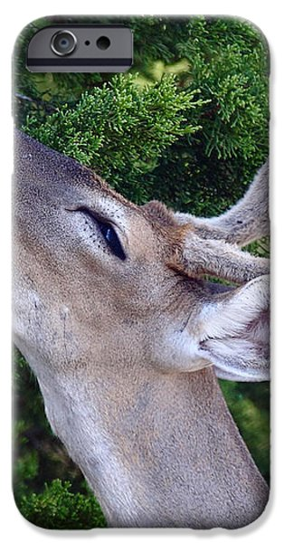 Your Nose So Bright iPhone Case by Robert Frederick