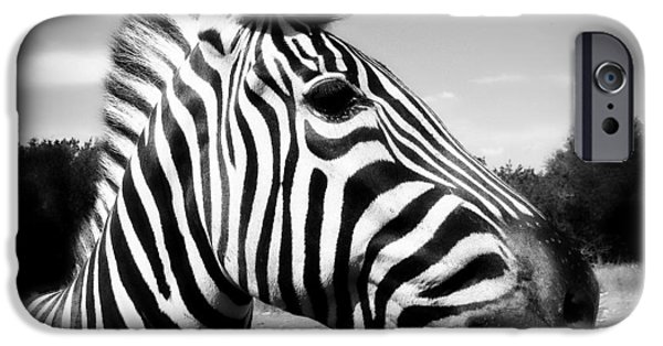 Balck Art iPhone Cases - Zebra 2 iPhone Case by Perry Webster