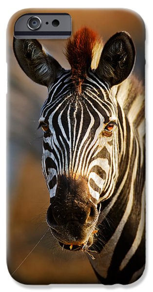 Close iPhone Cases - Zebra close-up portrait iPhone Case by Johan Swanepoel