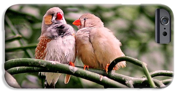 Couple iPhone Cases - Zebra Finch Colloquy iPhone Case by Rona Black