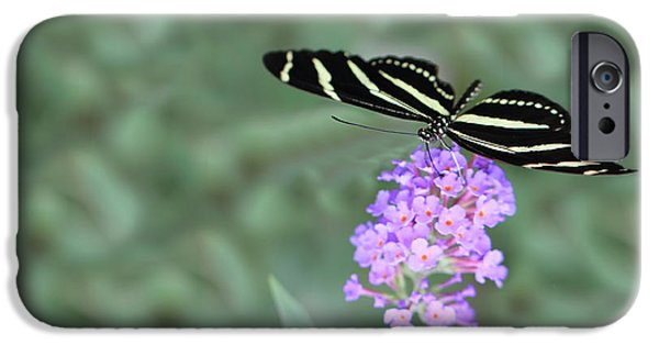 Hershey iPhone Cases - Zebra Longwing Butterfly  iPhone Case by Shelley Neff