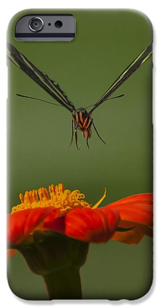 Flight Glass iPhone Cases - Zebra Longwing in Flight iPhone Case by Edelberto Cabrera