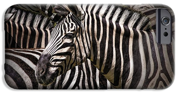 Zebra Prints iPhone Cases - Zebra lost among the Herd iPhone Case by Randall Nyhof