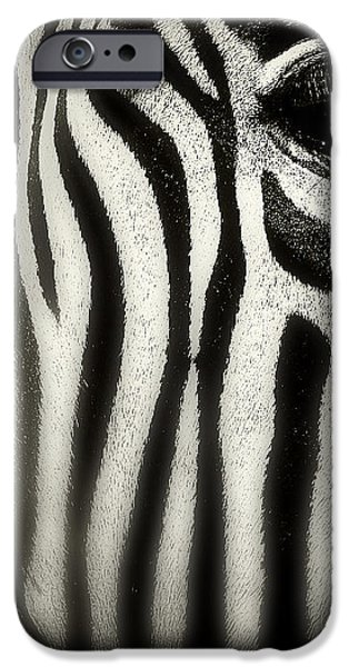 Balck Art iPhone Cases - Zebra iPhone Case by Perry Webster
