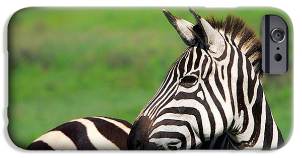 Animals Photographs iPhone Cases - Zebra iPhone Case by Sebastian Musial