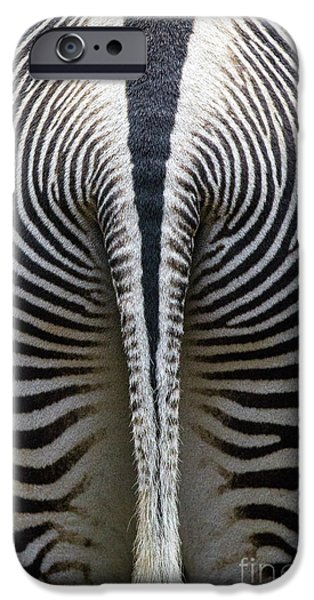 Fauna iPhone Cases - Zebra Stripes iPhone Case by Heiko Koehrer-Wagner
